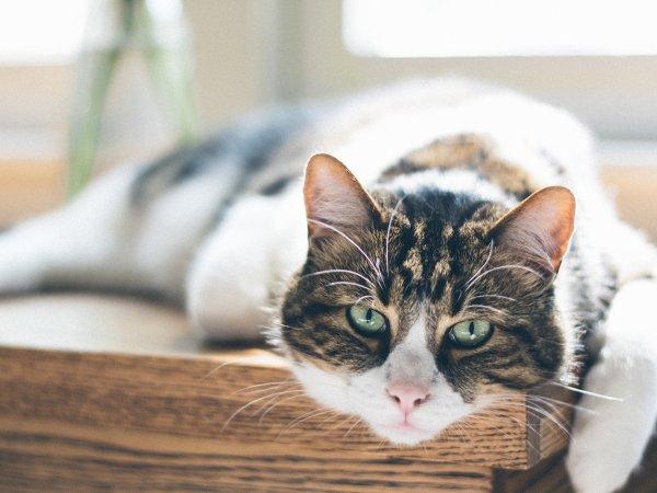 Il mio gatto vomita, cosa devo fare? - News - MIAV