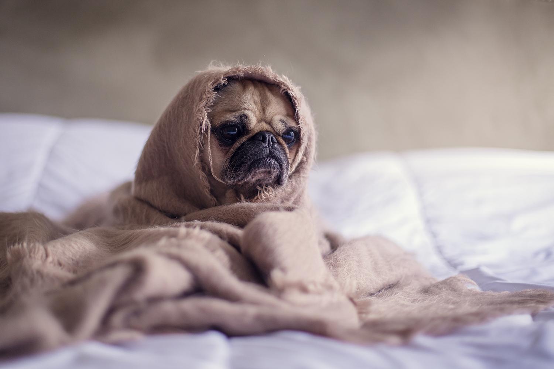 prostatite nel cane sintomi e cura